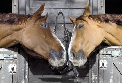 chevaux_034.jpg