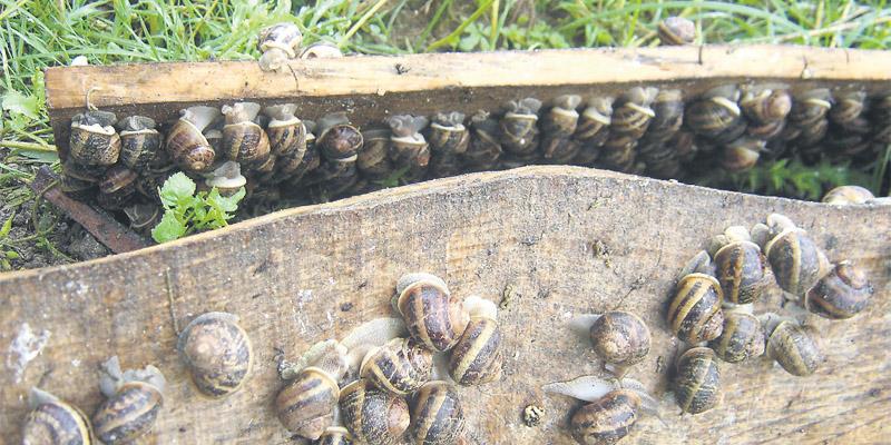 escargots_017.jpg