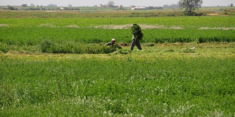 exploitation_agricole_trt.jpg