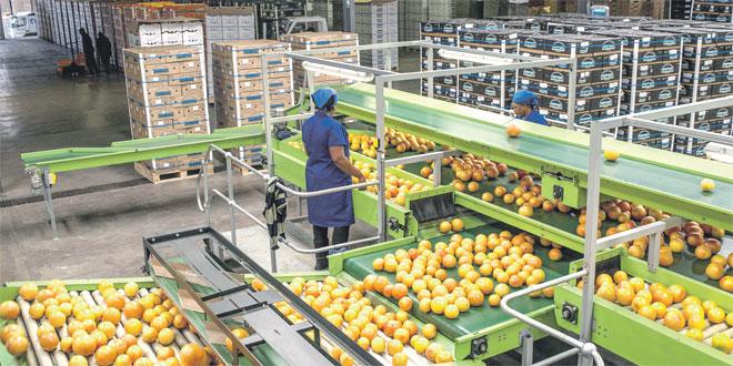 export-agrumes-077.jpg