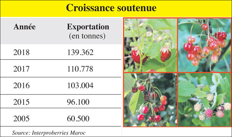 fruits-rouges-croissances-081.jpg