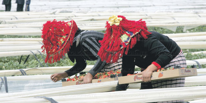 fruits-rougestravilleuses-081.jpg