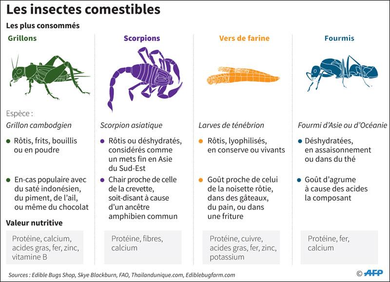insectes-062.jpg