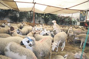 monde-agricole-3-04.jpg