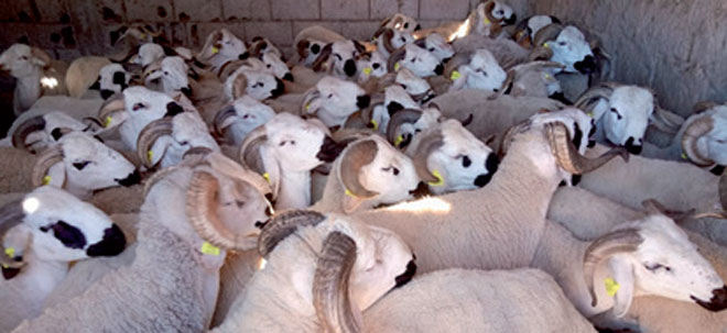 moutons-aid-029.jpg