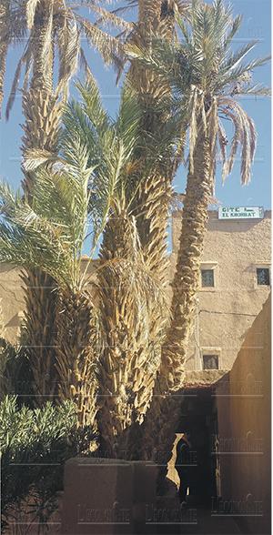 oasis_ksour_draa.jpg