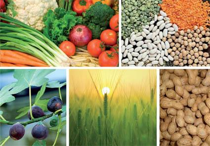 ocp_agriculture_091.jpg
