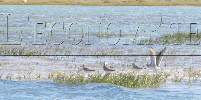 oiseau-zone-humides-2-034.jpg