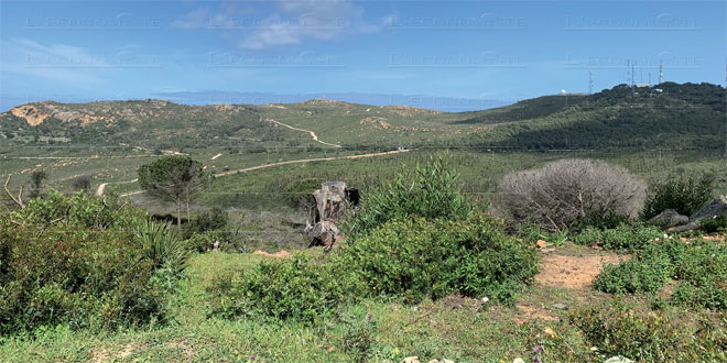 olive-nord-028.jpg