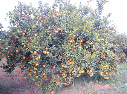 oranger_059.jpg