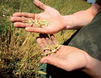 petite_agriculture_087.jpg