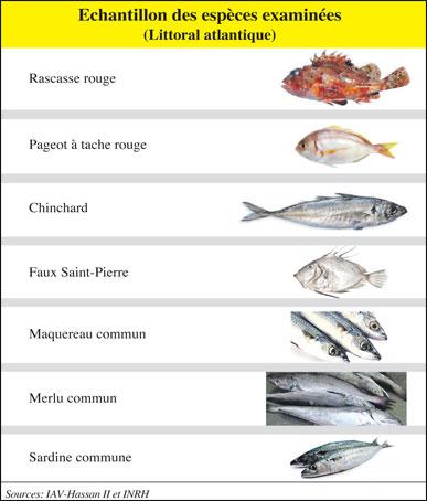 poissons-082.jpg