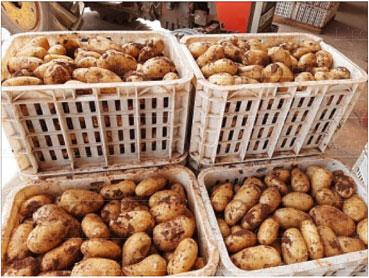 pommes-de-terre-074.jpg