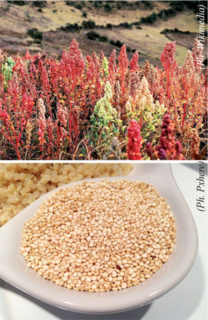 quinoa-054.jpg