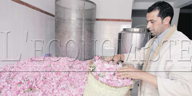 rose-a-parfum-professionnel-042.jpg