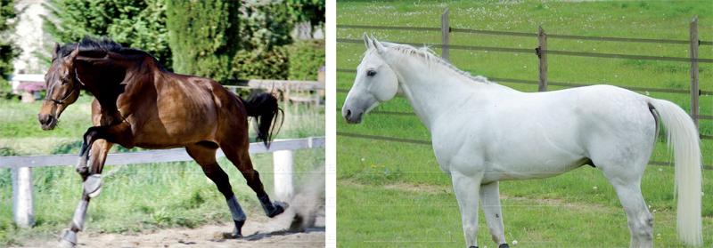 salon_du_cheval_019.jpg