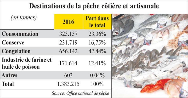 sardine_poissons_038.jpg