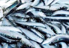 sardines_057.jpg