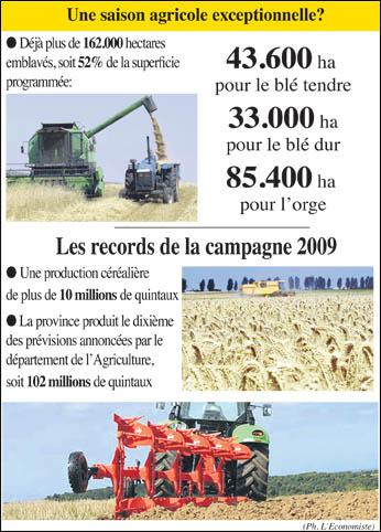 settat_agriculture_045.jpg