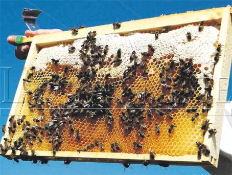 souss_apicultures_093.jpg