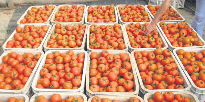 tomates-059.jpg