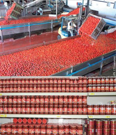tomates-08.jpg