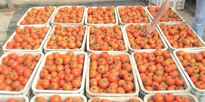 tomates-084.jpg