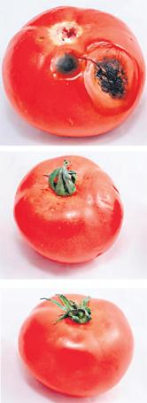 tomates_002.jpg