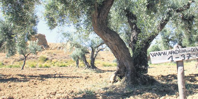tunisie_2_ijd.jpg