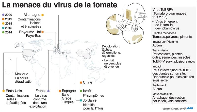 virus-tomate-002.jpg