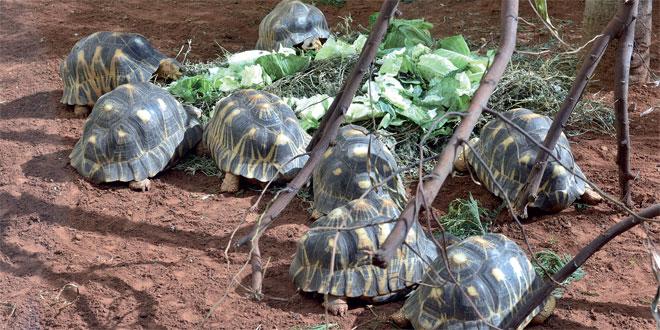 zoo-de-rabat-034.jpg