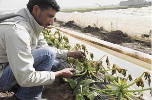Chambres d'agriculture du Maroc Les professionnels se préparent à la disette